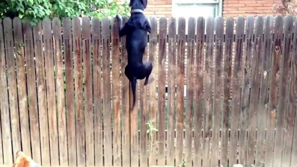 options-for-fencing-dogs
