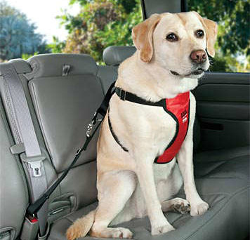 best-dog-harness