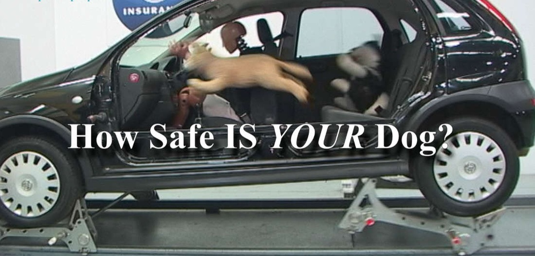 dog-safety-in-cars